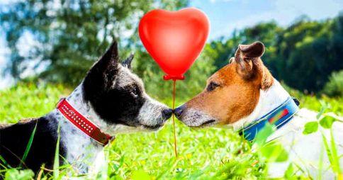Comenzó el Programa de Esterilización Canina