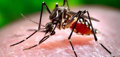 Prevención del Dengue: Tareas de fumigación en Mackenna